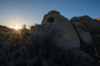 Joshua Tree Nationalpark, CA